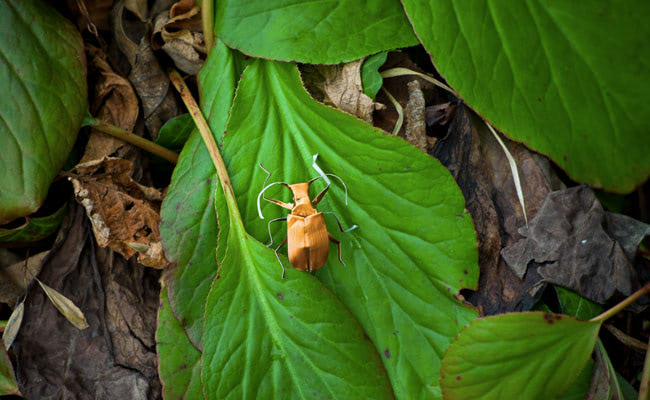 Visual of Plastic Pod Beetles