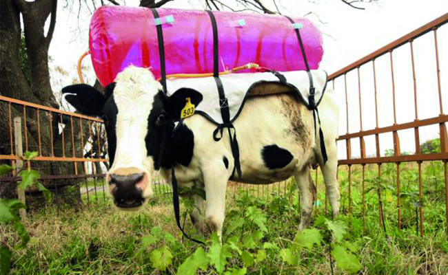 Visual of New Diets for Cows Can Stop Gas Emissions