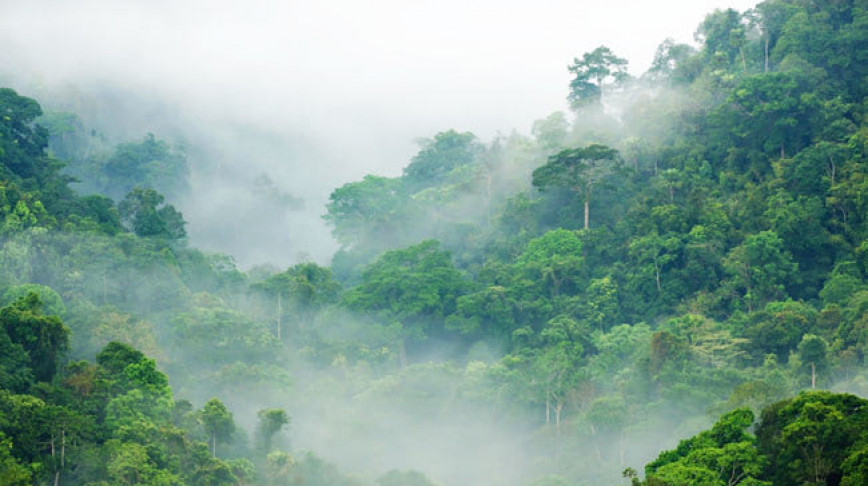 Visual of Rainforests Regrowth Boosts CO2 Capture