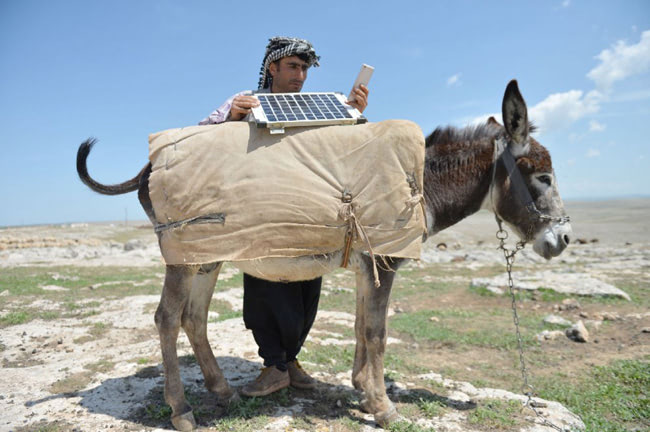 Visual of Solar-Powered Donkeys to Stay Online