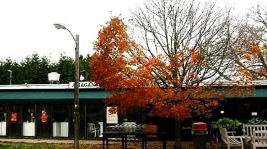 Visual of Streetlight Disrupts Seasonal Cycle of Trees