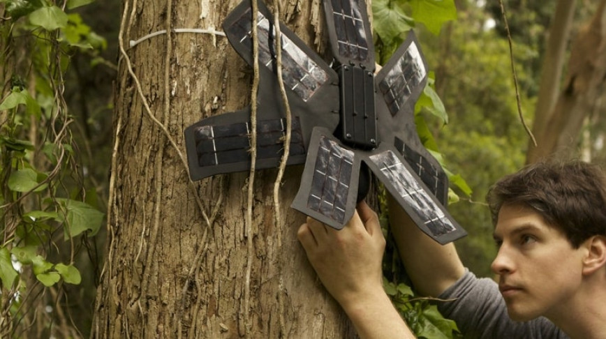 Visual of Old Cellphones to Fight Deforestation