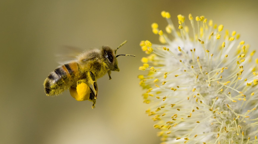 Visual of Artificial Light Threatens Pollination