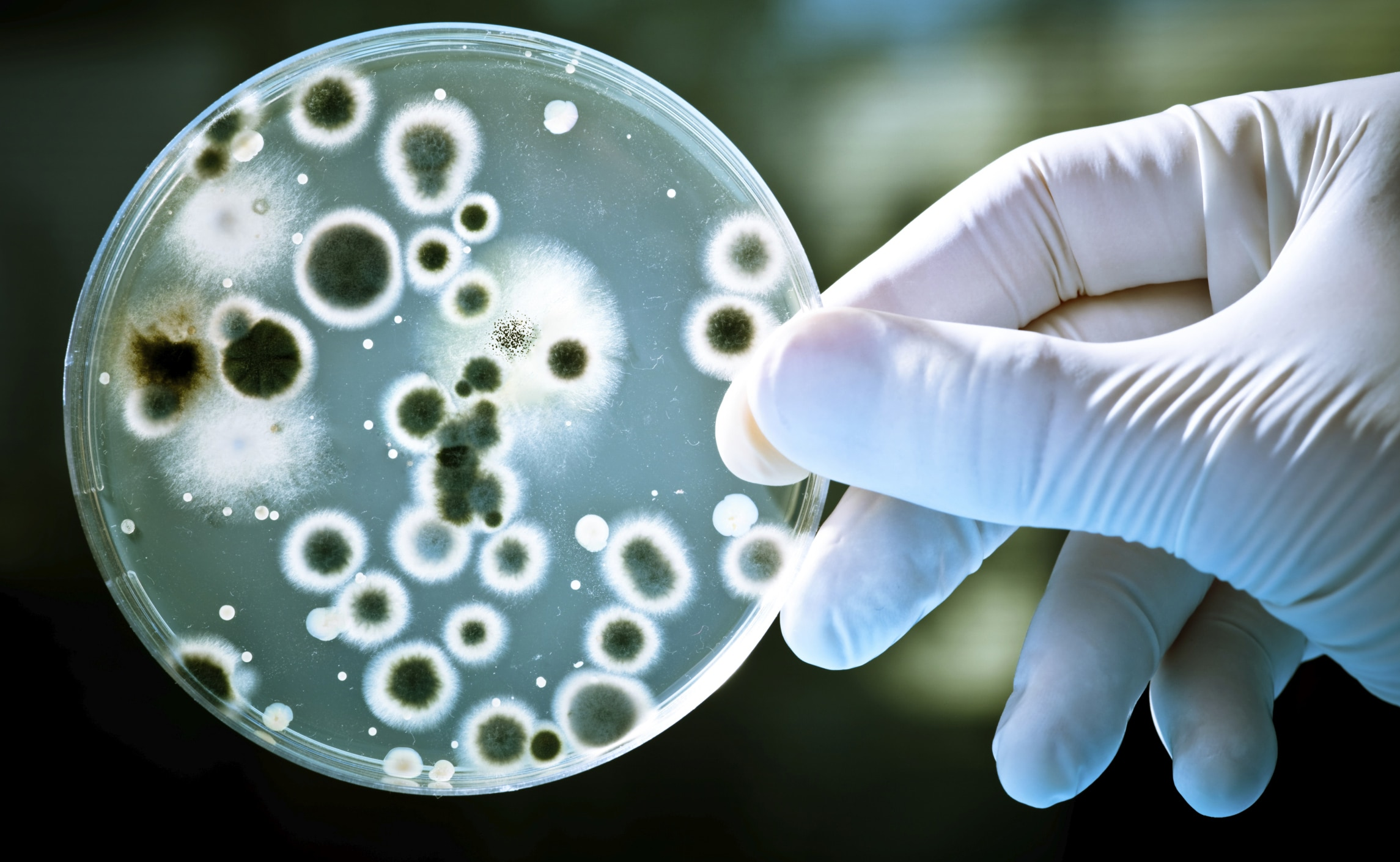 Visual of Bacteria Use Electronic Messaging