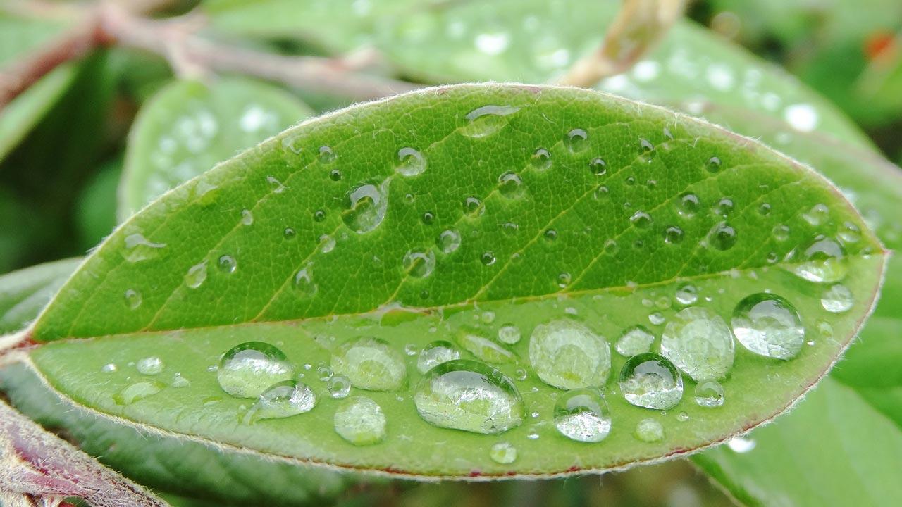 Visual of Bionic Leaf Helps Vegetables to Grow