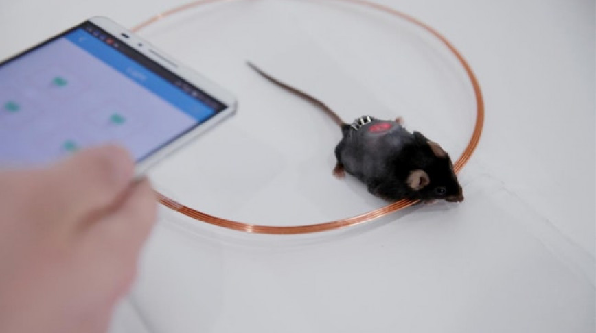 Visual of App Activates Cells That Manage Diabetes