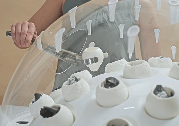 Visual of Fungal Futures: the Mushrooms Utopia