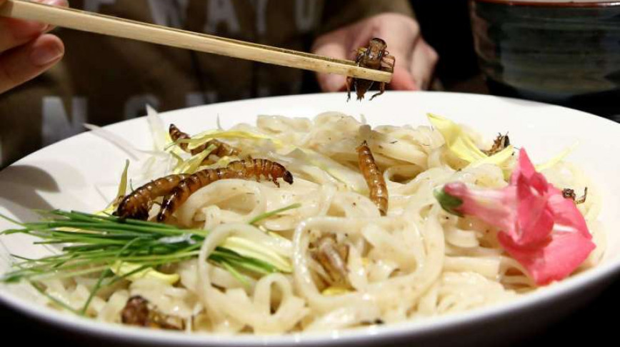Visual of Insect Ramen: the New Food Trend