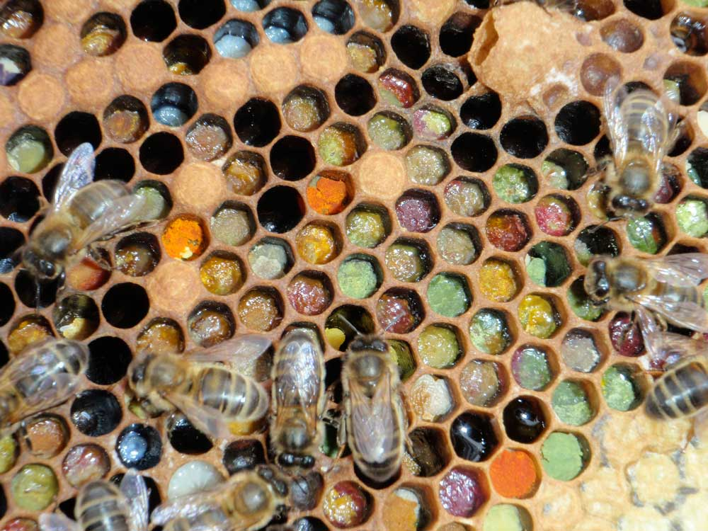 Visual of The Internet of Bees