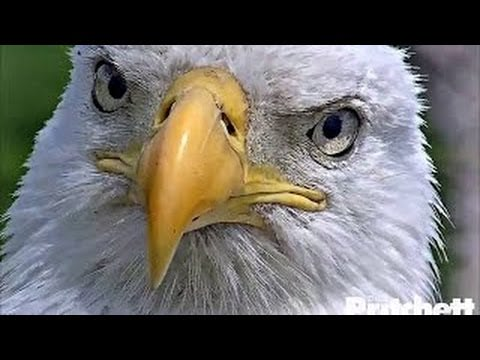 Visual of Keeping Up with the Eagles: Birdwatching 2.0