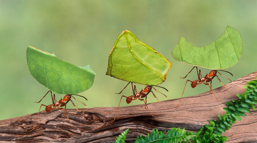 Visual of Lazy Worker Ants