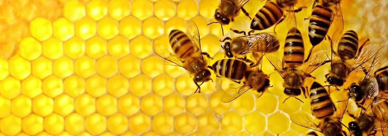Visual of The New Gold: Honey!