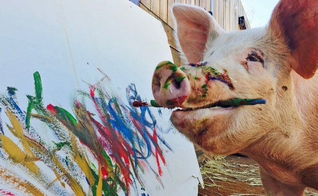 Visual of Pigcasso: the Painting Pig