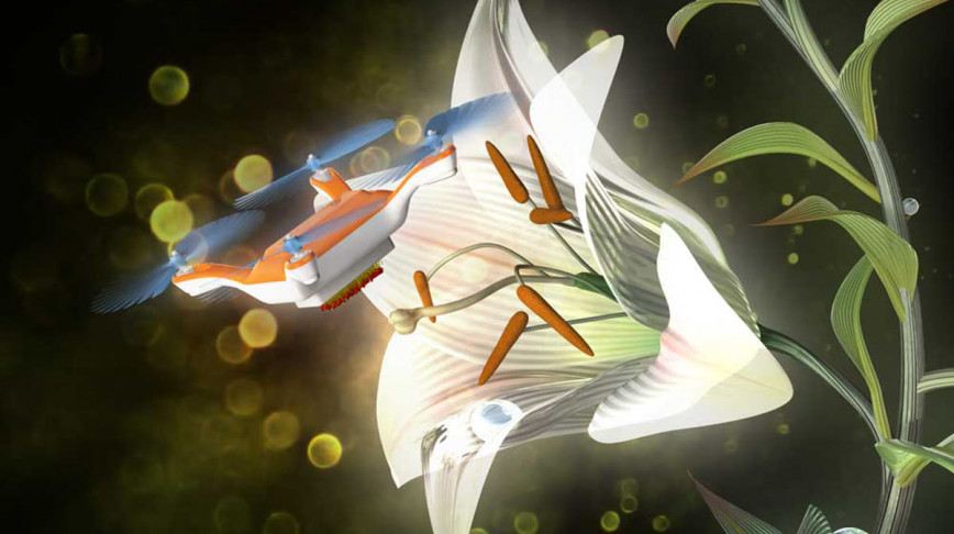 Visual of Robo-Bee Pollinated a Japanese Lily