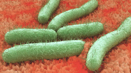 Visual of Bacteria Are the New Hard Drives