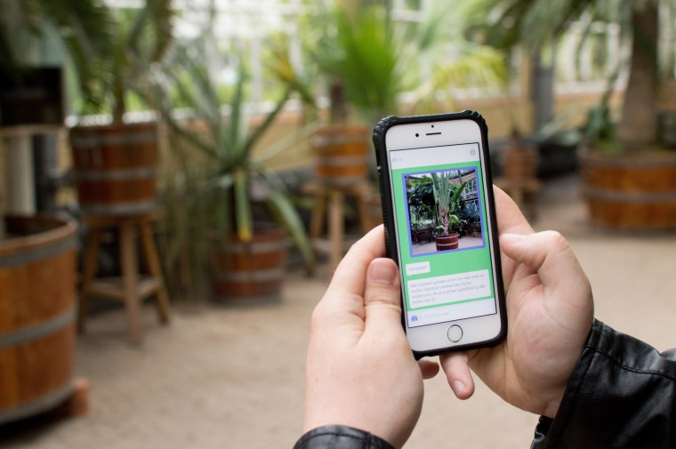 Visual of Chat with Plants in the Botanical Garden