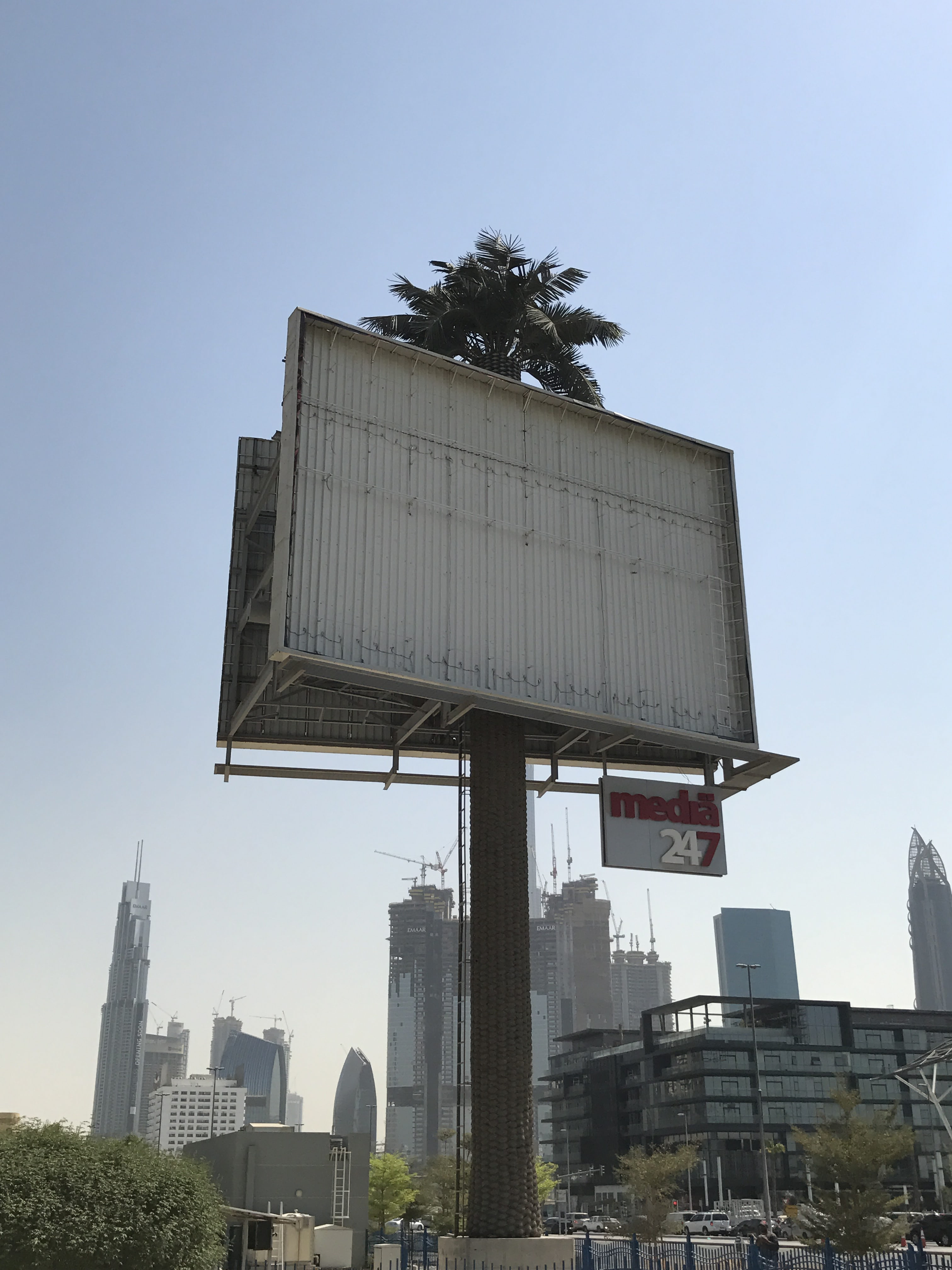Visual of New Tree Species Found Only in Dubai