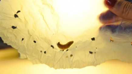 Visual of Plastic-Eating Worm Can Help Ease Pollution