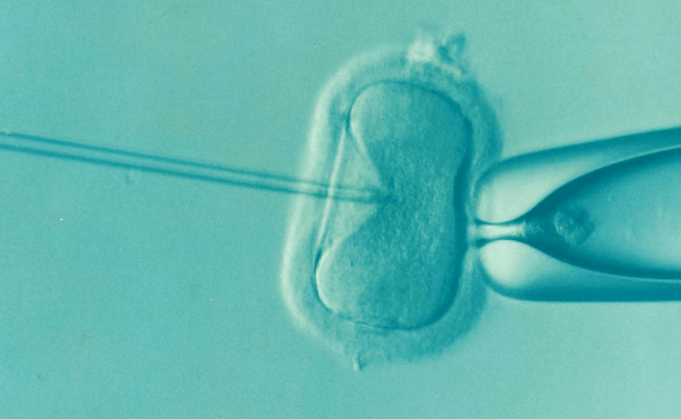 Visual of This controversial new test could be used to screen embryos for intelligence