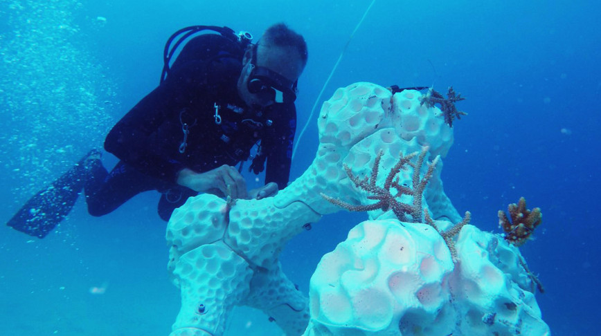 Visual of Adding a new dimension to marine restoration: 3D printing coral reefs