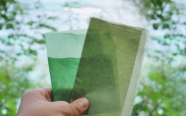 Visual of Edible packaging: Seaweed could replace plastic in disposable packaging