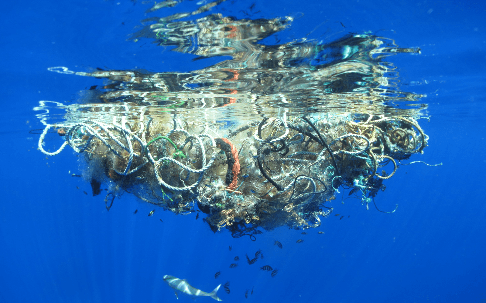 """Visual of The Great Pacific garbage """"patch"""" is now three times the size of France"""