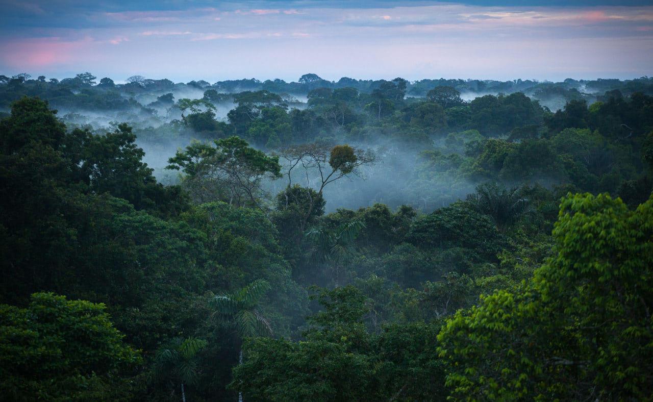 Visual of Smartphone app helps indigenous communities fight deforestation