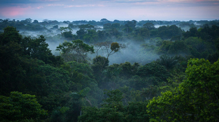 Visual of Smartphone app helps indigenous communities fight deforestation