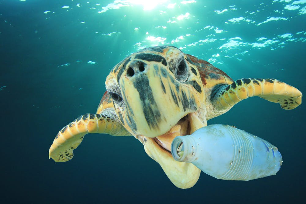 Visual of The world's plastic problem is bigger than the ocean