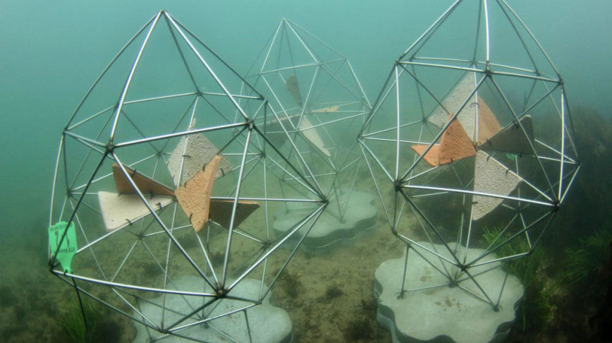 Visual of This cool artificial reef was just deployed in Sydney Harbor