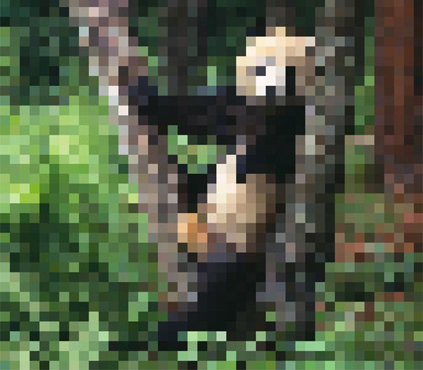 Visual of Endangered animal species, in pixels