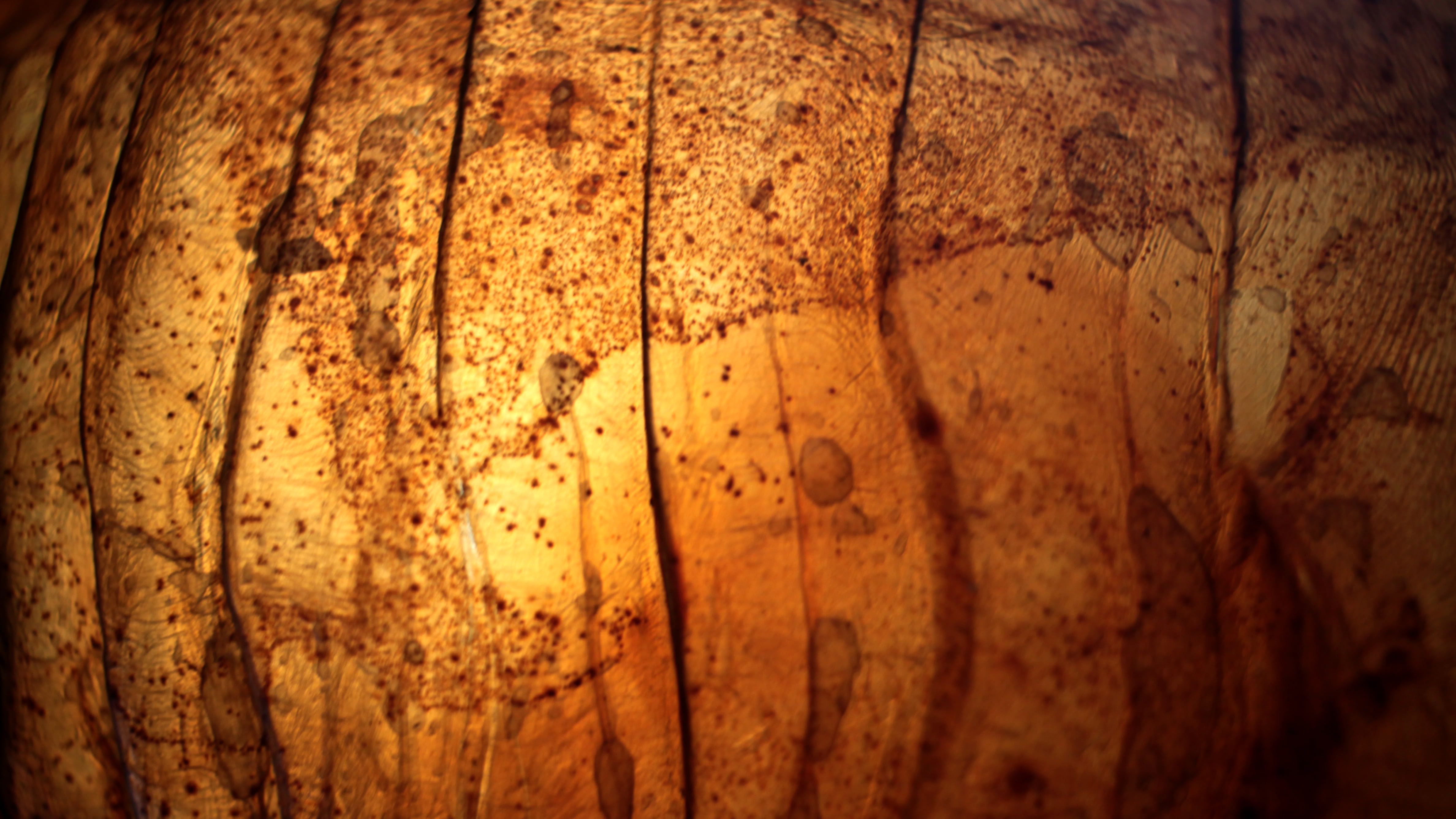 Visual of How to biofabricate leather; lessons from the lab