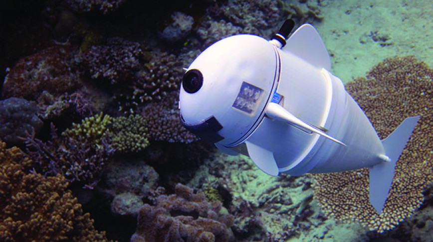 Visual of Watch this lifelike robot fish swim through the ocean