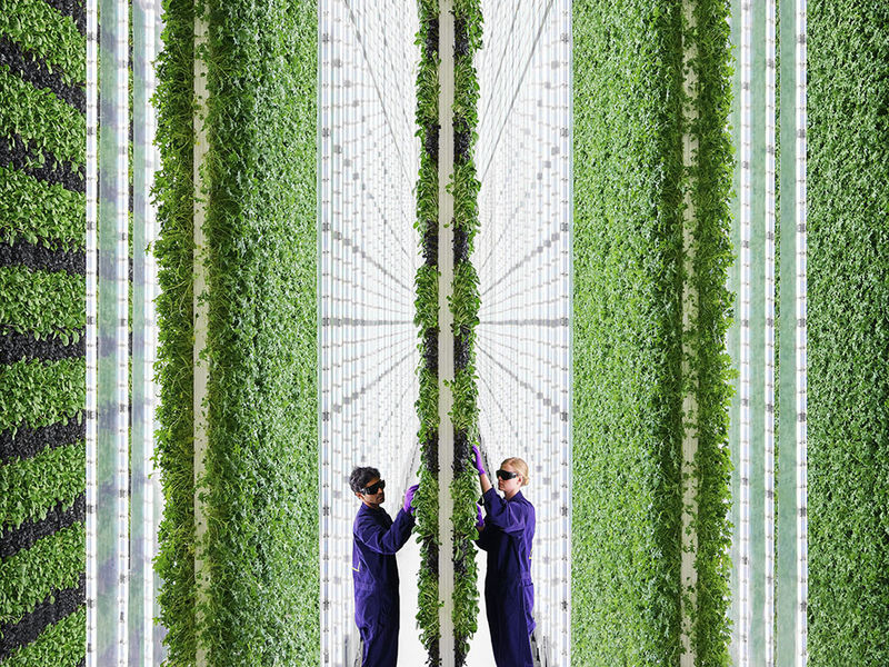 Visual of Three ways farms of the future can feed the planet and heal it too