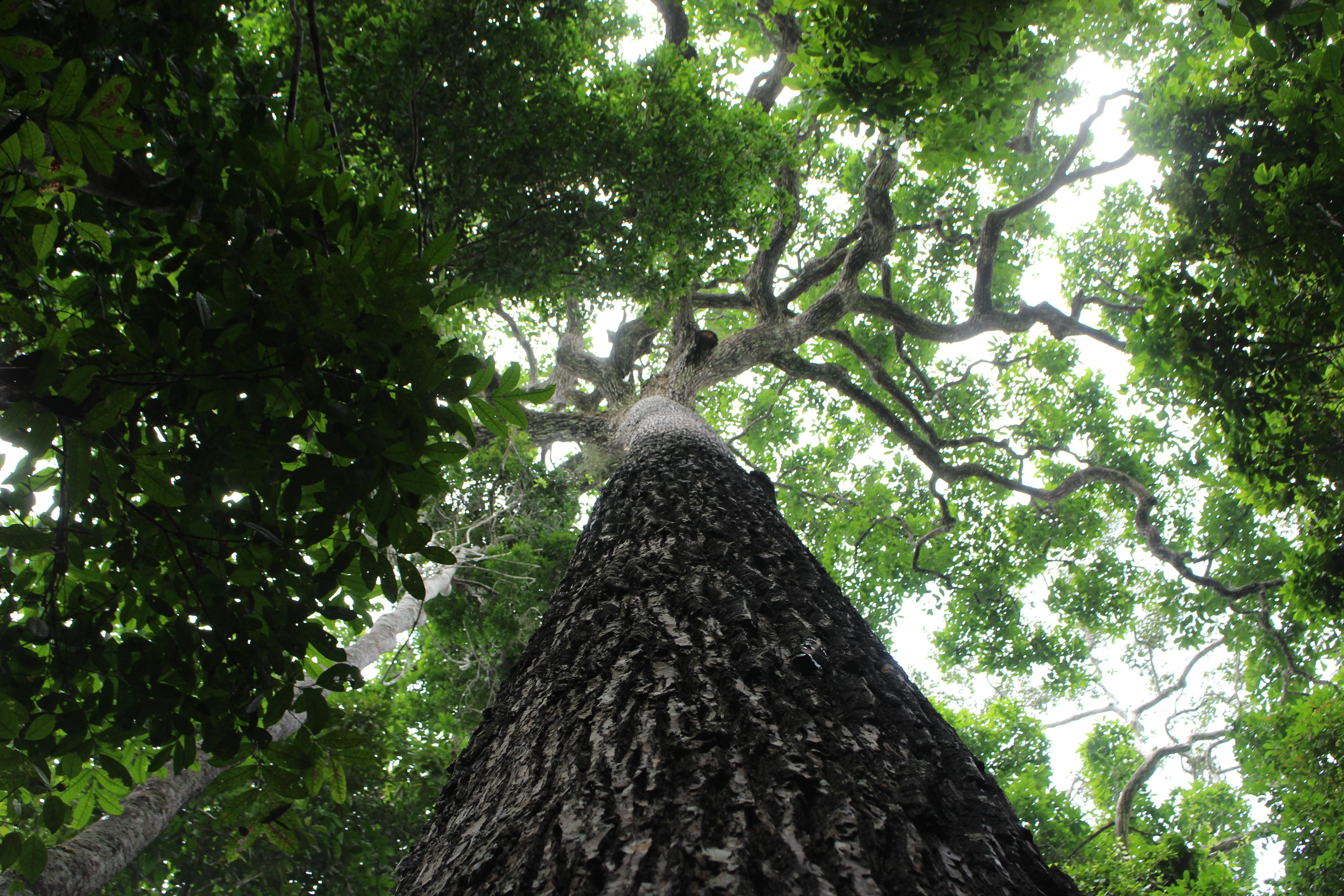 Visual of How Amazon trees write their own autobiographies
