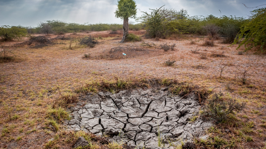 Visual of Five unusual technologies for harvesting water in dry areas