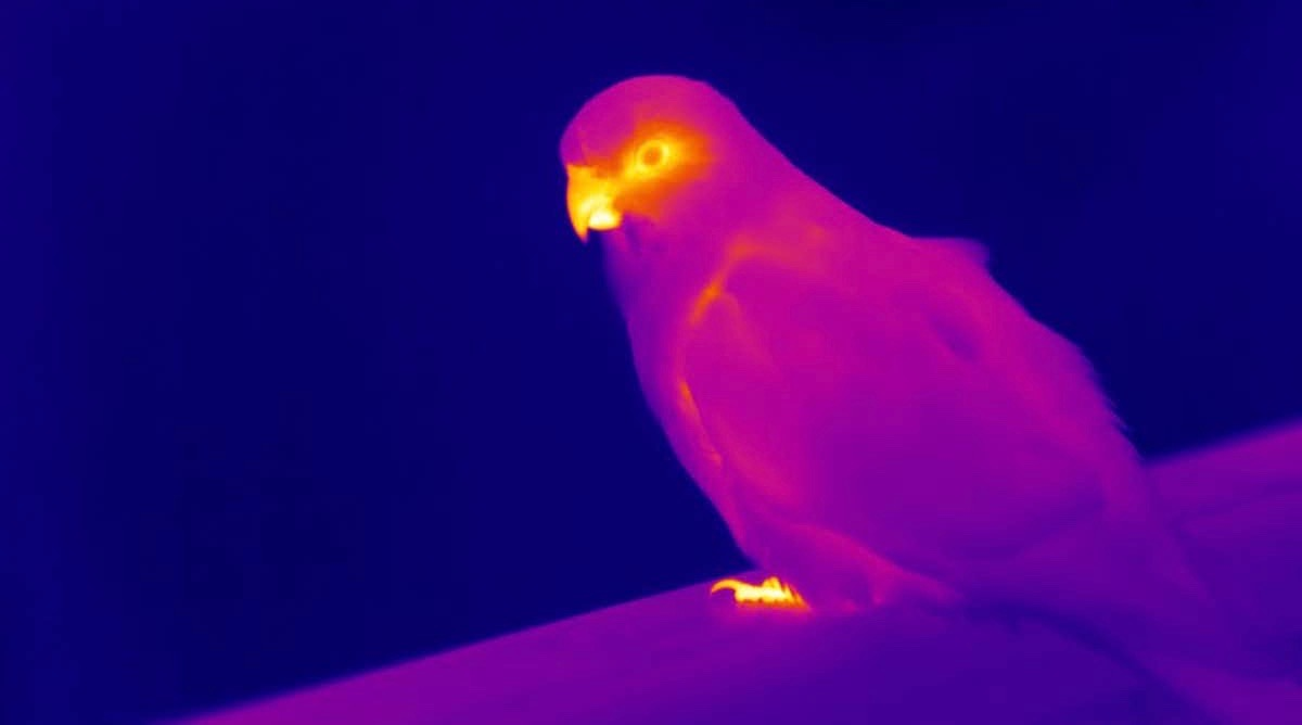 Visual of Animals are 'shapeshifting' to cope with climate change