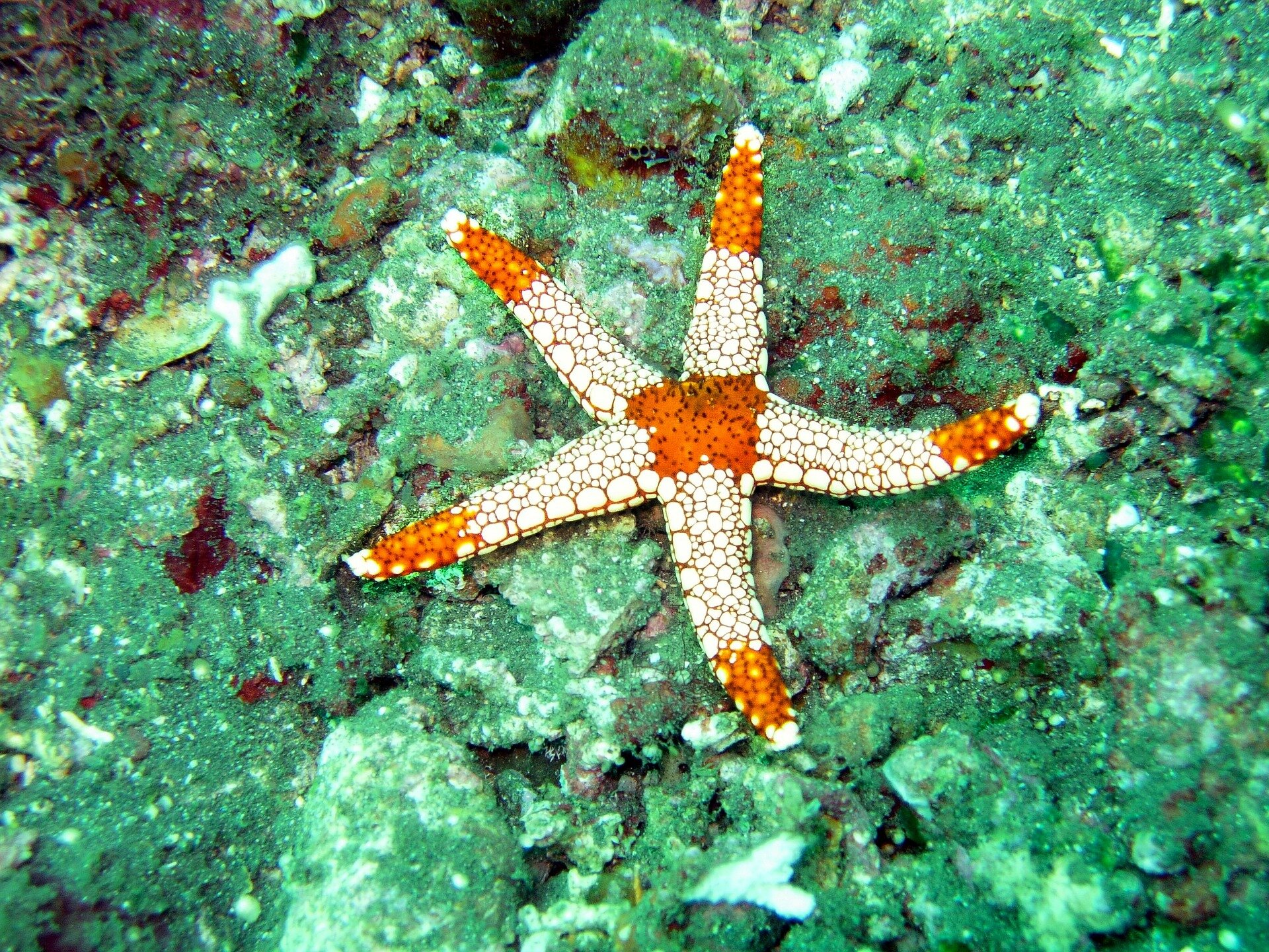 Visual of How a starfish inspires robotic design