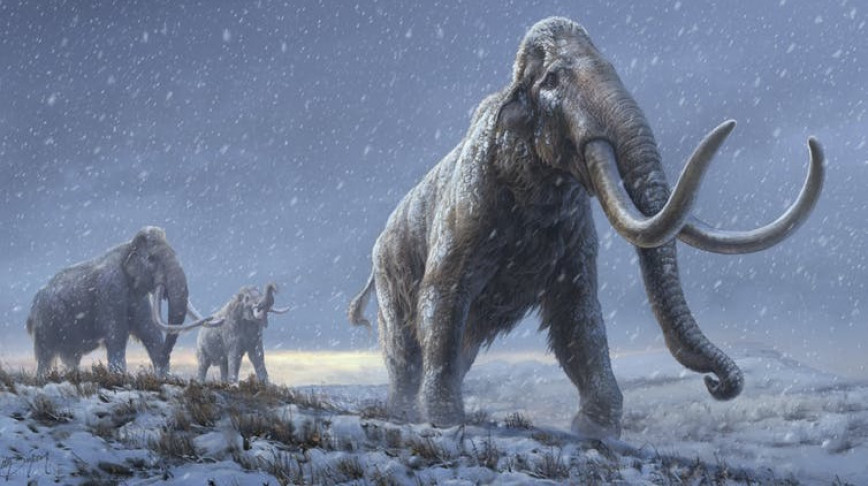 Visual of We sequenced the oldest ever DNA, from million-year old mammoths
