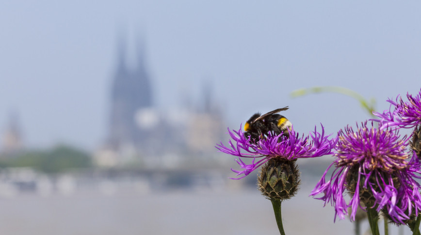 Visual of Why urban gardens are crucial for conserving bees and butterflies